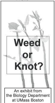 piece of knotweed bookmark