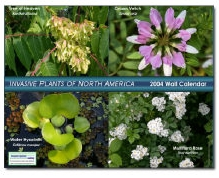 image of invasive plant 2004 wall calendar