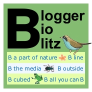 Blogger BioBlitz mini logo, bird-free