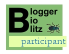 Blogger BioBlitz participant logo with beetle