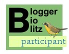 Blogger BioBlitz participant logo, yellow birdy, via bootstrap analysis