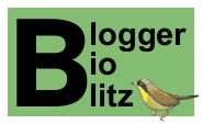 Blogger BioBlitz mini logo, words and yellow birdy