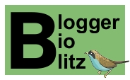 Blogger BioBlitz mini logo, words and birdy