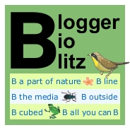 Blogger BioBlitz mini logo, yellow bird