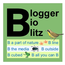 Blogger BioBlitz full-size logo, yellow bird